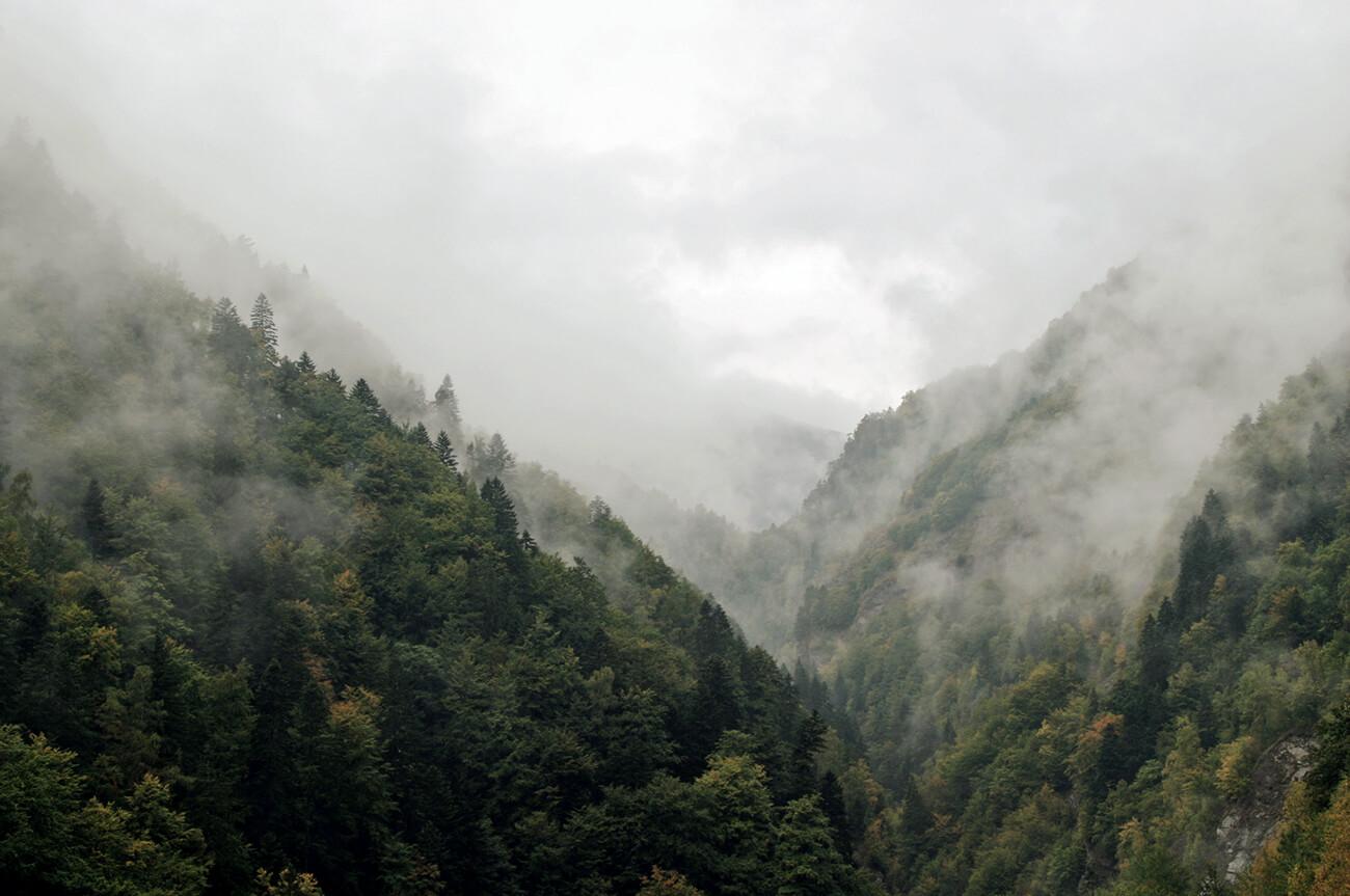 Nebelverhangener Wald