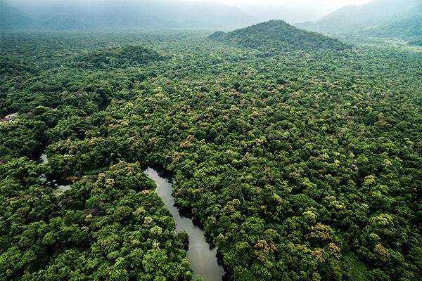 Amazonas Regenwald, Südamerika