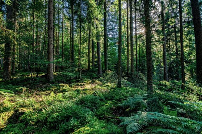 Die dichten Wälder de Schwarzwalds, Deutschland