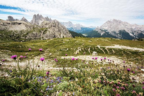 Bergspitzen hinter Blumen, Italien