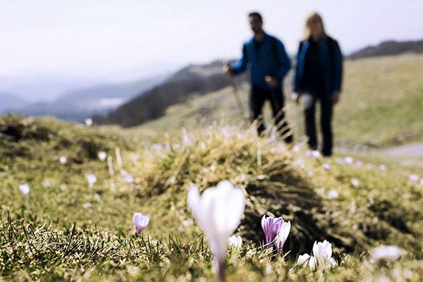 blumen-berglandschaft-wanderer