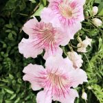 Rosa Blumen im Fokus