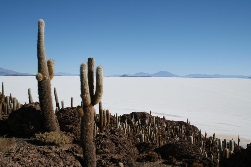 Katkeen und weiße Salzwueste im Hintergrund, Berge in der Ferne