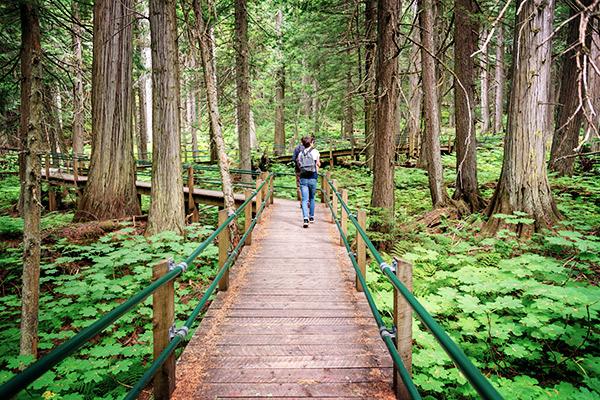 Cedar Trail im Glacier Nationalpark, Kanada
