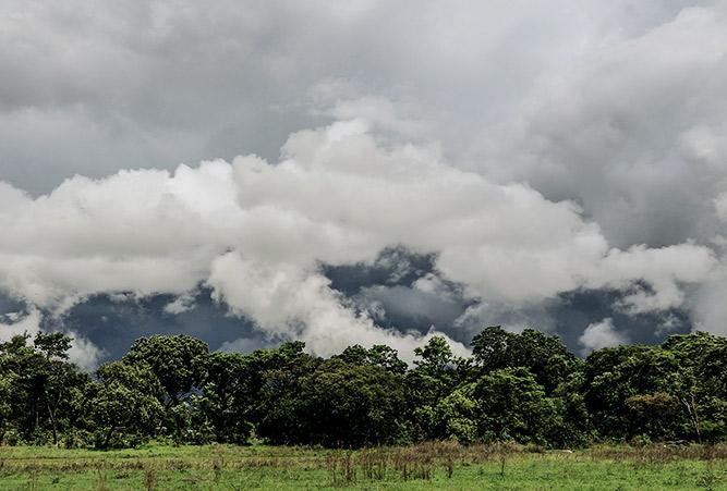 Nebelschwaden über afrikanischem Wald