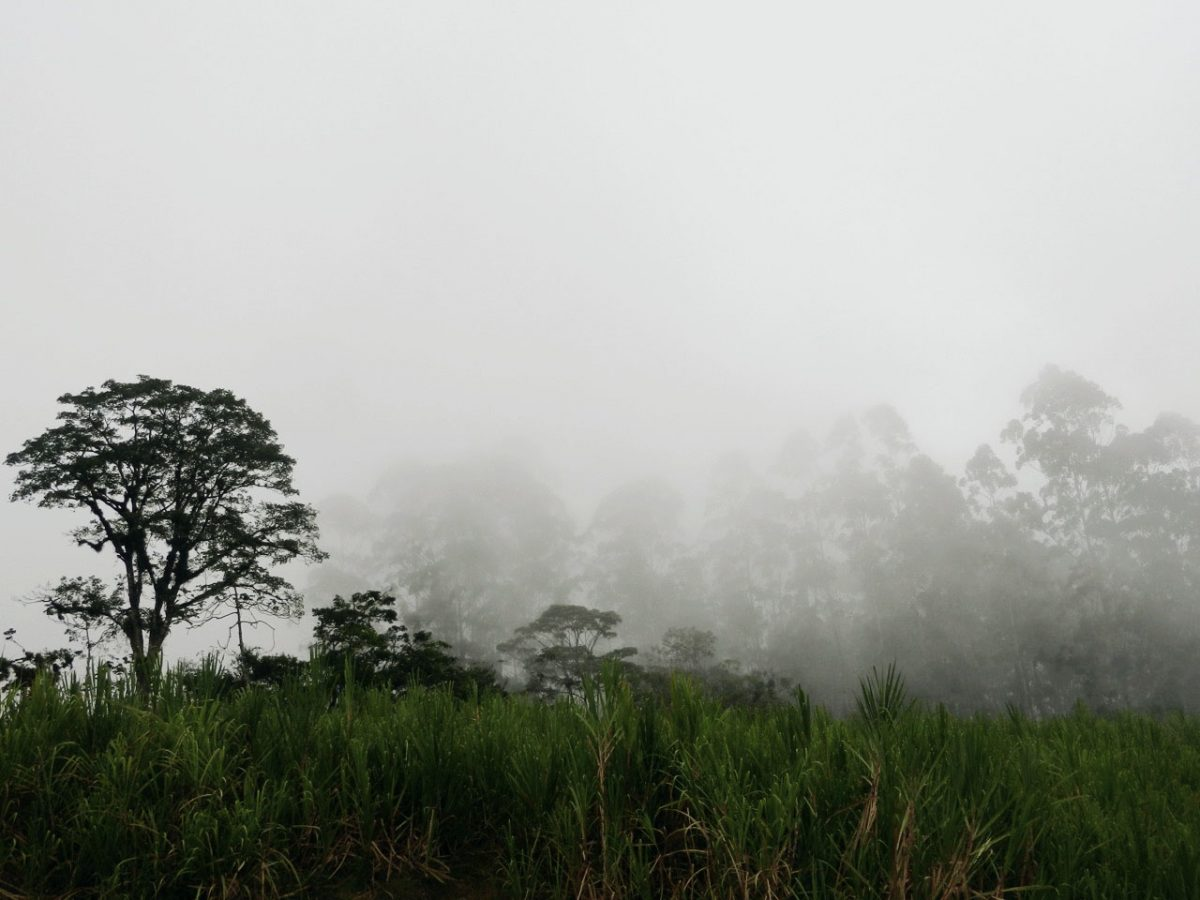 Costa Rica Dschungel mit Nebel