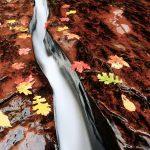 Fließendes Wasser, Herbstblätter, auf dem Weg zum Subway, Zion Nationalpark. © David Wirzba