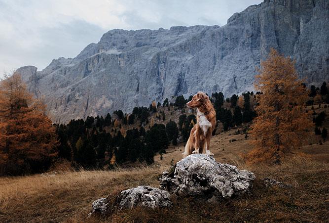 Hund in den Dolomiten