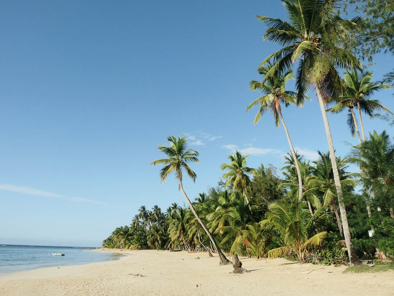 Palmenstrand und Meer