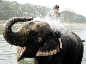 Elefant spritzt Reisende nass, Nepal