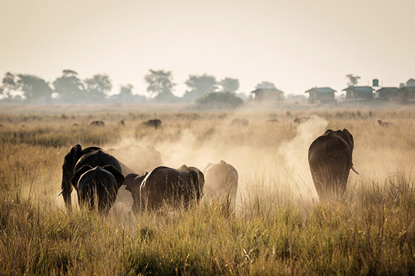 Herde Elefanten im Krüger Nationalpark, Südafrika