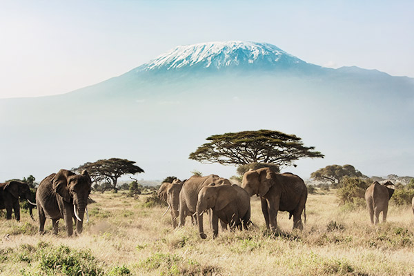 elefanten-kilimanjaro-tansania