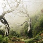 Bäume schlängeln sich über den Pfad