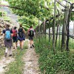 Gruppe Wanderer unter einer Weinlaube
