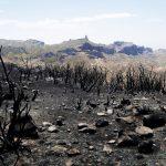 Verbrannte Fläche vor dem Roque Nublo.