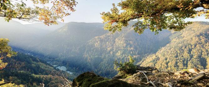 Aussicht im Schwarzwald Nationalpark, Deutschland