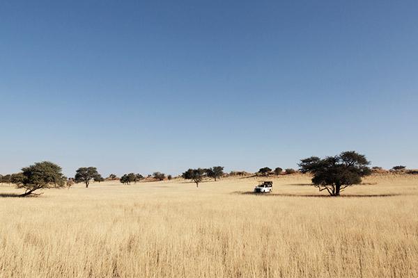 Kalahari Wüste, Botswana