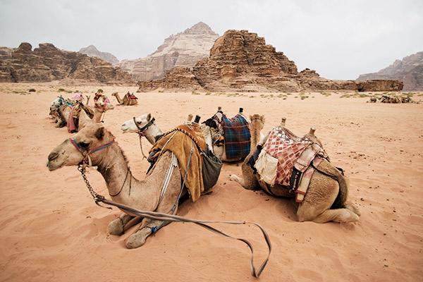 Kamele Wadi Rum Wüste, Jordanien