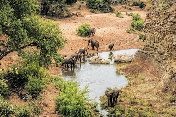 Elefanten im Kruger Nationalpark, Suedafrika