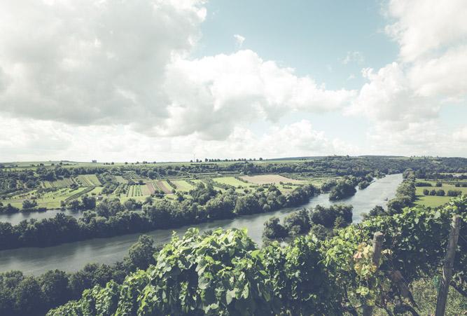 Ausblick auf Weinberge und gepflegte, grüne Kulturlandschaften die durch einen mittel breiten Fluss durchtrennt werden