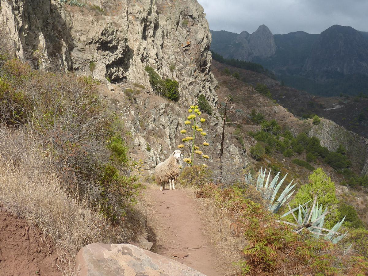 Auf dem Weg vom Mirador Degolla de Peraza nach San Sebastian