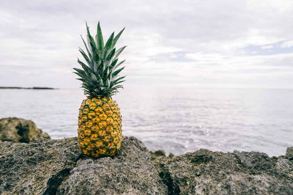 ananas auf vulkangestein vor meer