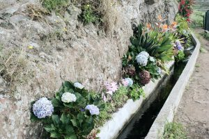 Blumengärten am Levada-Weg