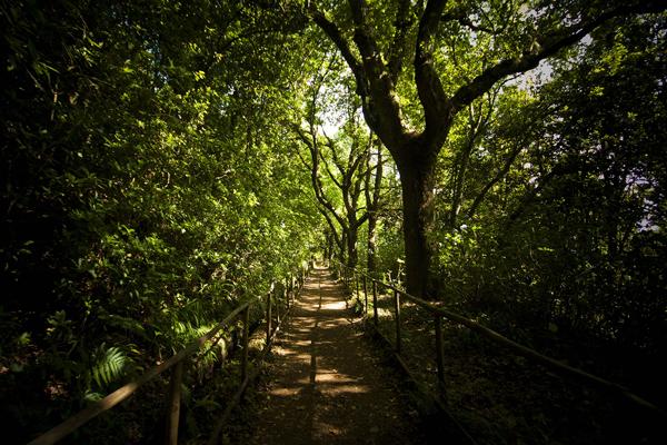 """Auf dem Weg zum grünen Kessel """"Caldeirão Verde"""""""