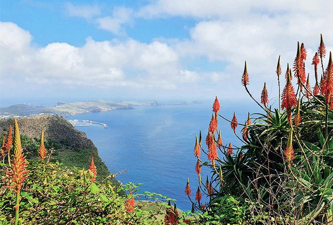 Blumen und Küste auf Madeira