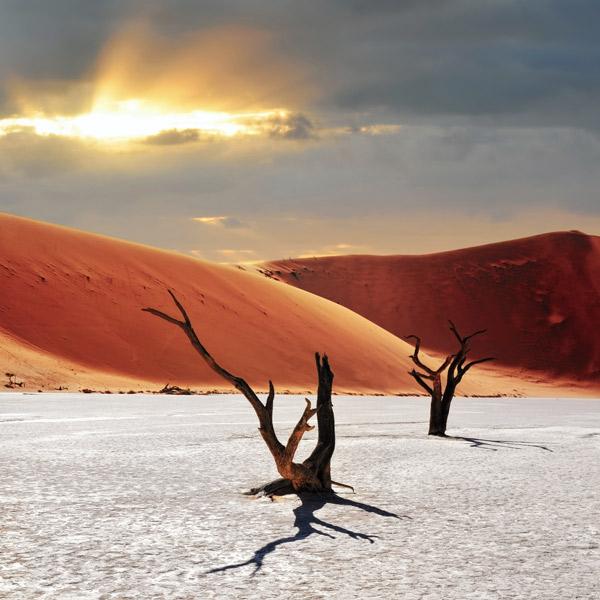 Schwarze Baumstämme auf einem weißen Boden. Im Hintergrund rote Sanddünen und Sonnenstrahlen durch Wolken am Himmel