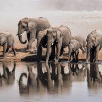 Eine Elefantenfamilie an einem Wasserloch