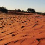 Die roten Dünen der Kalahari