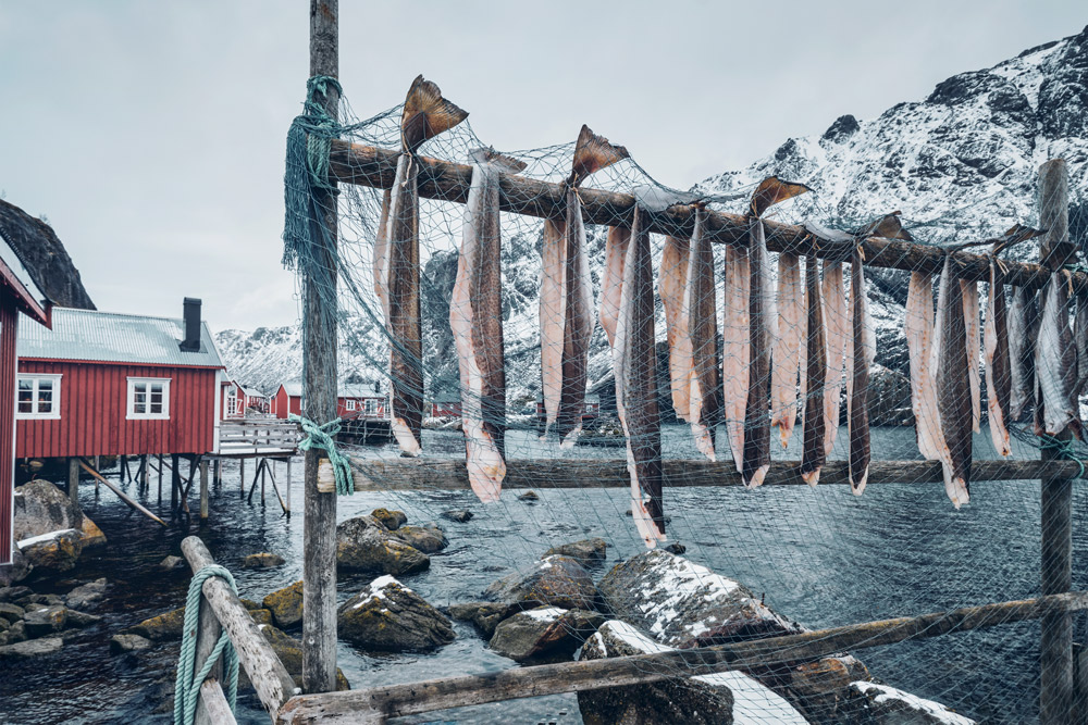 fische, die auf holzbalken hängen, über fluss und roten häusern im hintergrund