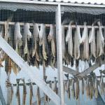 An Holzstäben aufgehängte getrocknete Fische