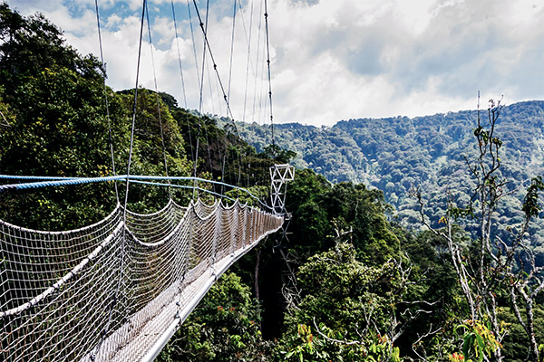 Nyungwe Nationalpark, Ruanda