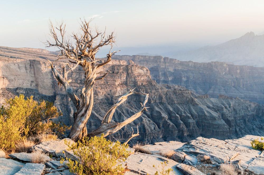 Ausblick von felsplateau mit knorrigem Baum ohne blätter im vordergrund
