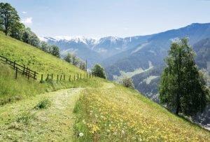 Grüner Wanderweg durch blumenübersäte Wiese in den Hohe Tauern, Österreich