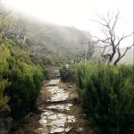 Gepflasteter Wanderpfad im Nebel