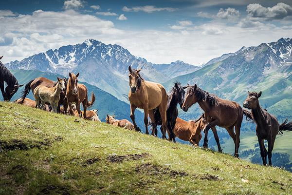 Pferde im Jyrgalan Tal, Kirgistan