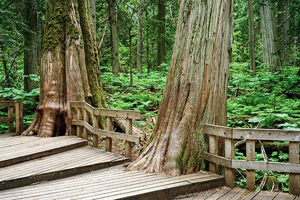 Plankenweg im Mount-Revelstoke Nationalpark