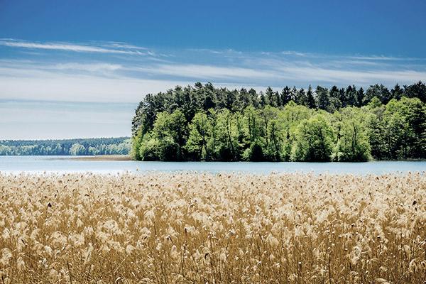 See und Tannen, Polen