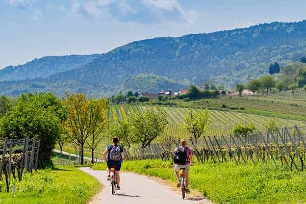 Radfahrer in den Weinbergen Deutschlands