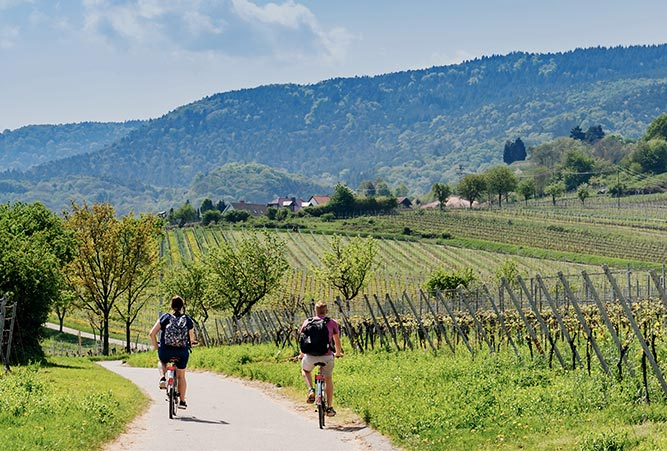 Radweg durch Weinberge in Rheinland-Pfalz
