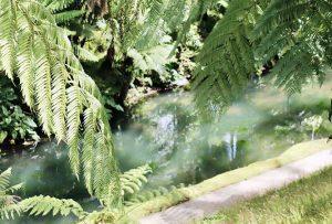 reisebericht-azoren-terra-nostra-garden-farne