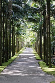reisebericht-azoren-terra-nostra-garden-weg-mit-palmen