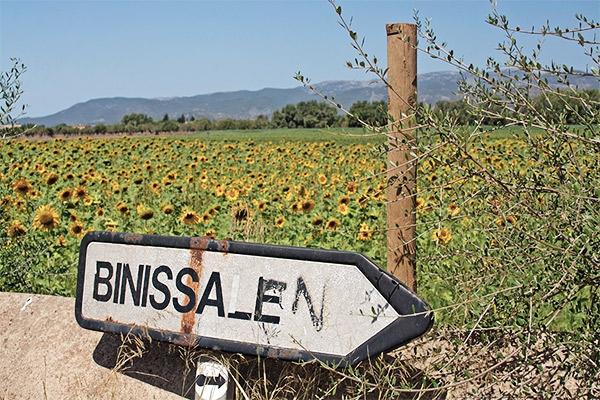 Ortsschild Binissalem vor einem Sonnenblumenfeld, Mallorca