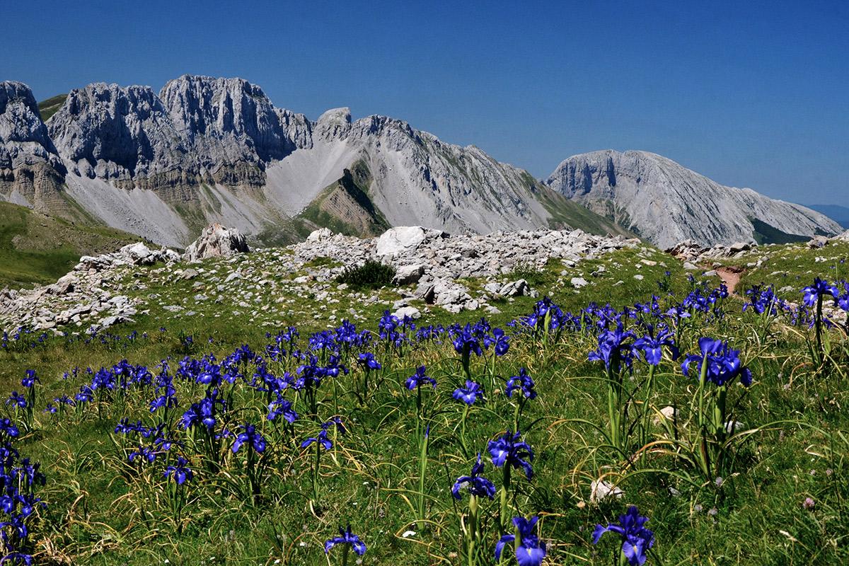 Lila-blaue Schwertlilien in den Pyrenäen
