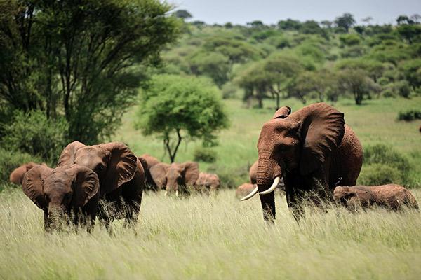 Serengeti Nationalpark, Tansania
