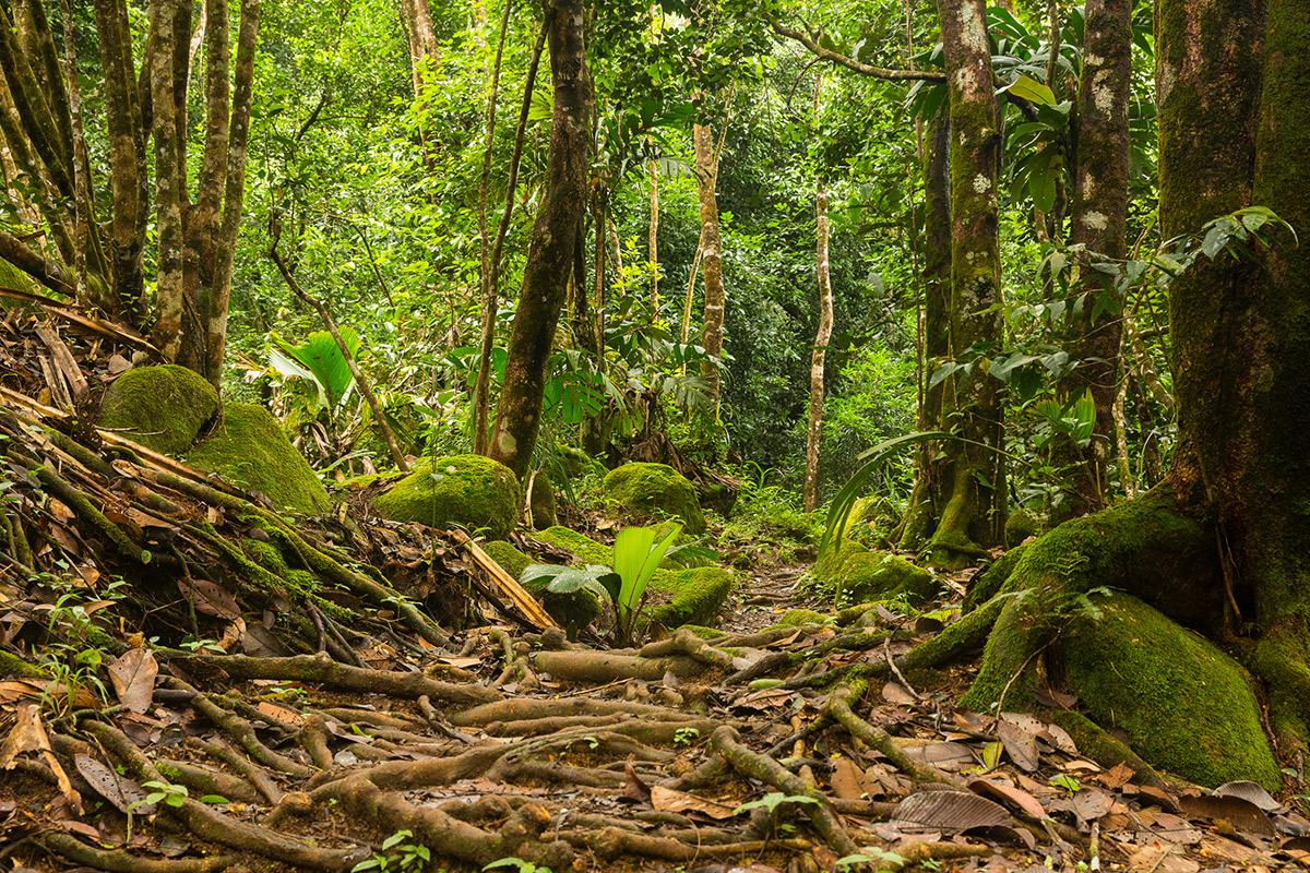 Verwunschene Pfade durch den Dschungel auf den Seychellen