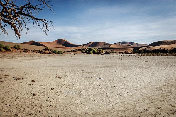 Durrer Baum in der Namib Wüste, Namibia